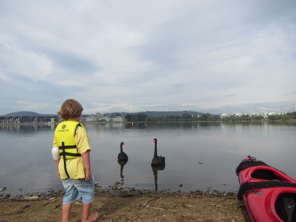 Lake Burley Griffin welcoming committee