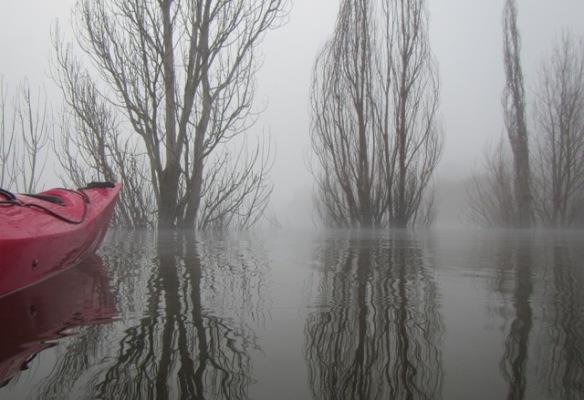A fog silhoutte