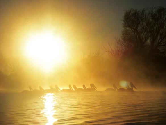 Pelican Haze