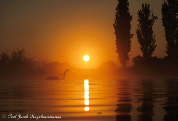 I just love to swan around and enjoy a good sunrise.