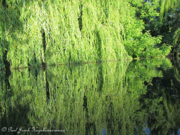 Reflections of green are everywhere to be seen.