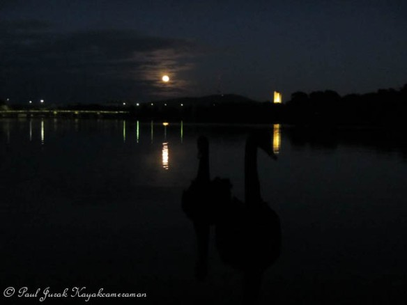 4.53am: Swan and a full moon are a great stating combination.