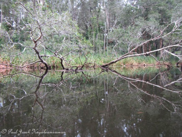 Wild reflections are to be found everywhere